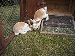 Keeping Rabbits - long story + guidance needed!-img_0015.jpg
