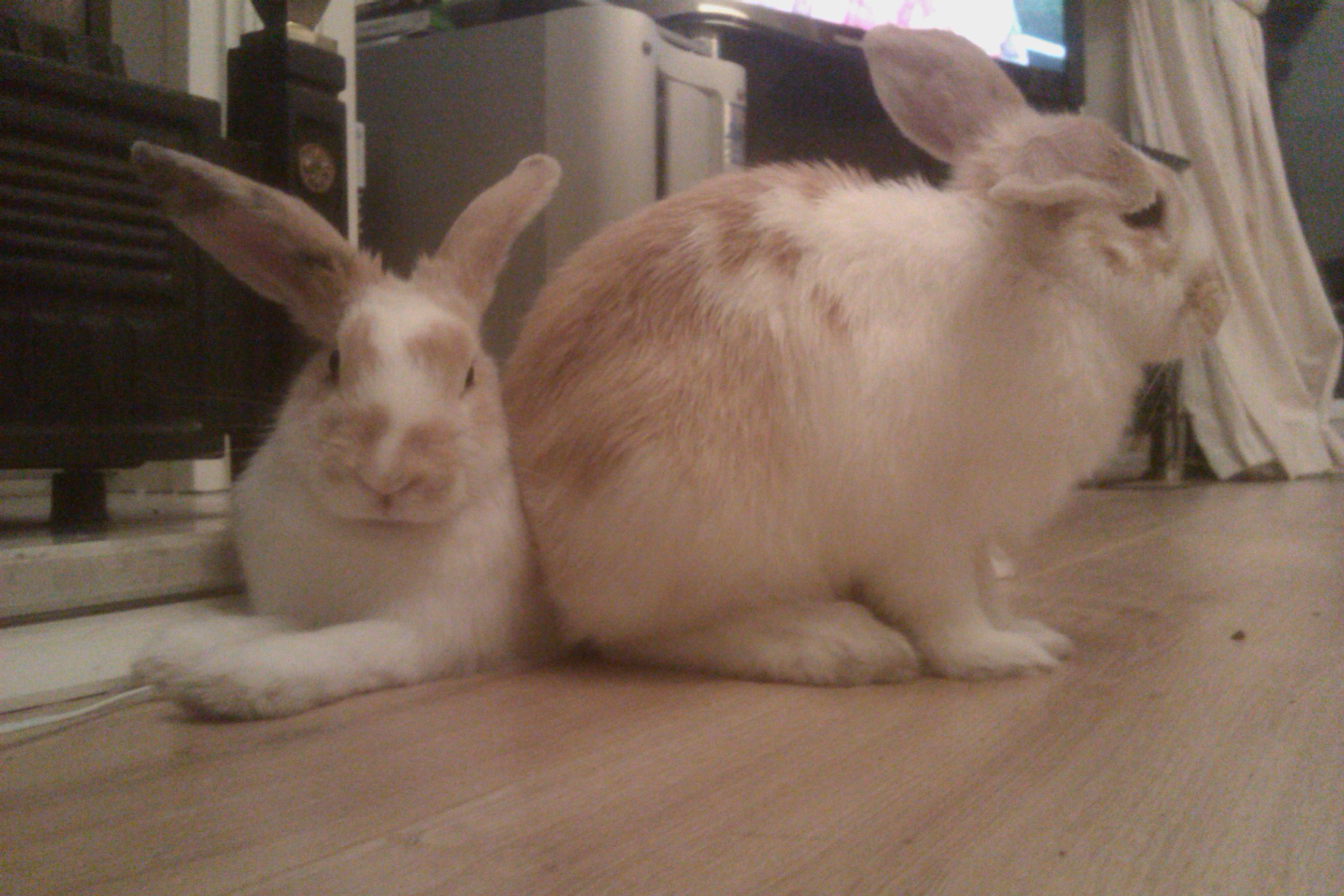 Keeping Rabbits - long story + guidance needed!