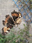 Look kids, the last butterfly of the year-img_1846.jpg
