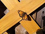 Look kids, the last butterfly of the year-iphonepic-004.jpg