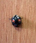 They're here!-ladybird.jpg