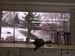 Weather wrong!-work-window-051211.jpg
