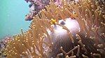 SCUBA Diving-390290_10150479016546003_595356002_9348267_1189307921_n.jpg