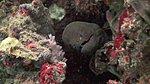SCUBA Diving-398529_10150479039501003_595356002_9348414_1950253299_n.jpg