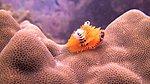 SCUBA Diving-390065_10150479035496003_595356002_9348390_1224740688_n.jpg