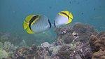SCUBA Diving-394292_10150479026866003_595356002_9348331_1413686467_n.jpg