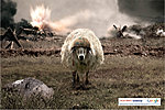 Falklands-google-battlesheep.jpg