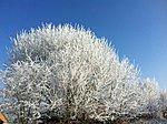 Ice age-img_0367.jpg