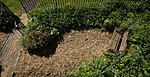Garden 2012-img_2637-copy.jpg