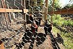 Garden 2012-img_2645-copy.jpg