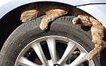 Edupets!-readers-cat-tyre_2430792k.jpg