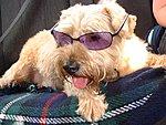 Edupets!-cooldog.jpg
