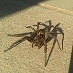 Whats this rather lethal looking insect???-1375648499992.jpg