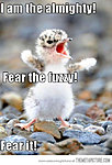 This has to be one of the sweetest things ever...-funny-baby-bird-yelling.jpg