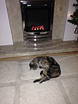Anyone know anything about gas fires? I'm buying.-imageuploadedbyedugeek1389218533.269014.jpg