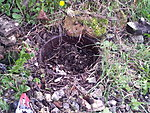 There's a something at the bottom of our garden....-2014-04-13-14.47.32.jpg