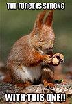 Guys, i did a thing!!-forece-squirrel-meme.jpg