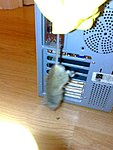 Best IT problem... mouse in neeeeeed-n510507710_1340645_4120.jpg