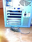 Best IT problem... mouse in neeeeeed-n510507710_1340644_3800.jpg
