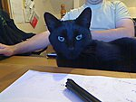 What shall I call my new cat.-picture-11.jpg