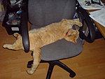 What shall I call my new cat.-dsc00021.jpg
