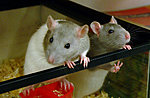 Animals-4015774899_3389ec1a8a.jpg