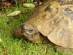 Geeks and their pets names-tortoise-old.jpg
