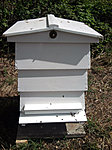 The Bees have arrived-hive2.jpg