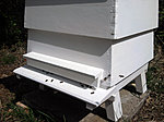 The Bees have arrived-hive3.jpg