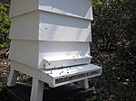 The Bees have arrived-hive4.jpg