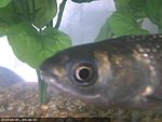 Fishcam Tank Anybody??-fish.jpg