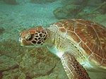 SCUBA Diving-tenerife07-.jpg