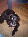 New Dog-180468_490658108774_505723774_6186474_4480172_n.jpg