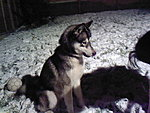 New Dog-zeus-snow.jpg