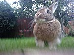 members/jinnantonnixx-albums-rabbit-picture10991-img-20110810-200050.jpg